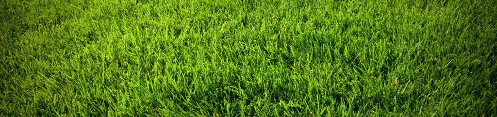 Perth Artificial Grass Installation
